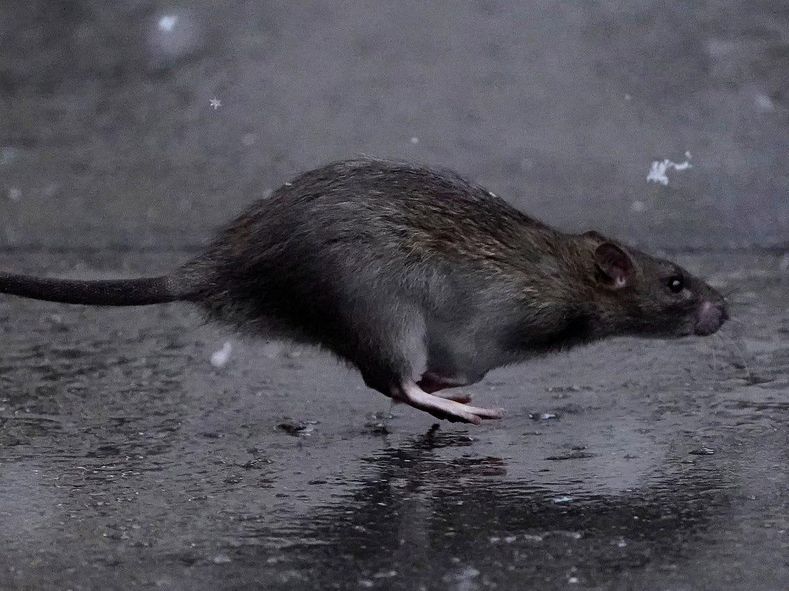 How Do Pest Control Services Slay Those Creepy-Crawlies?
