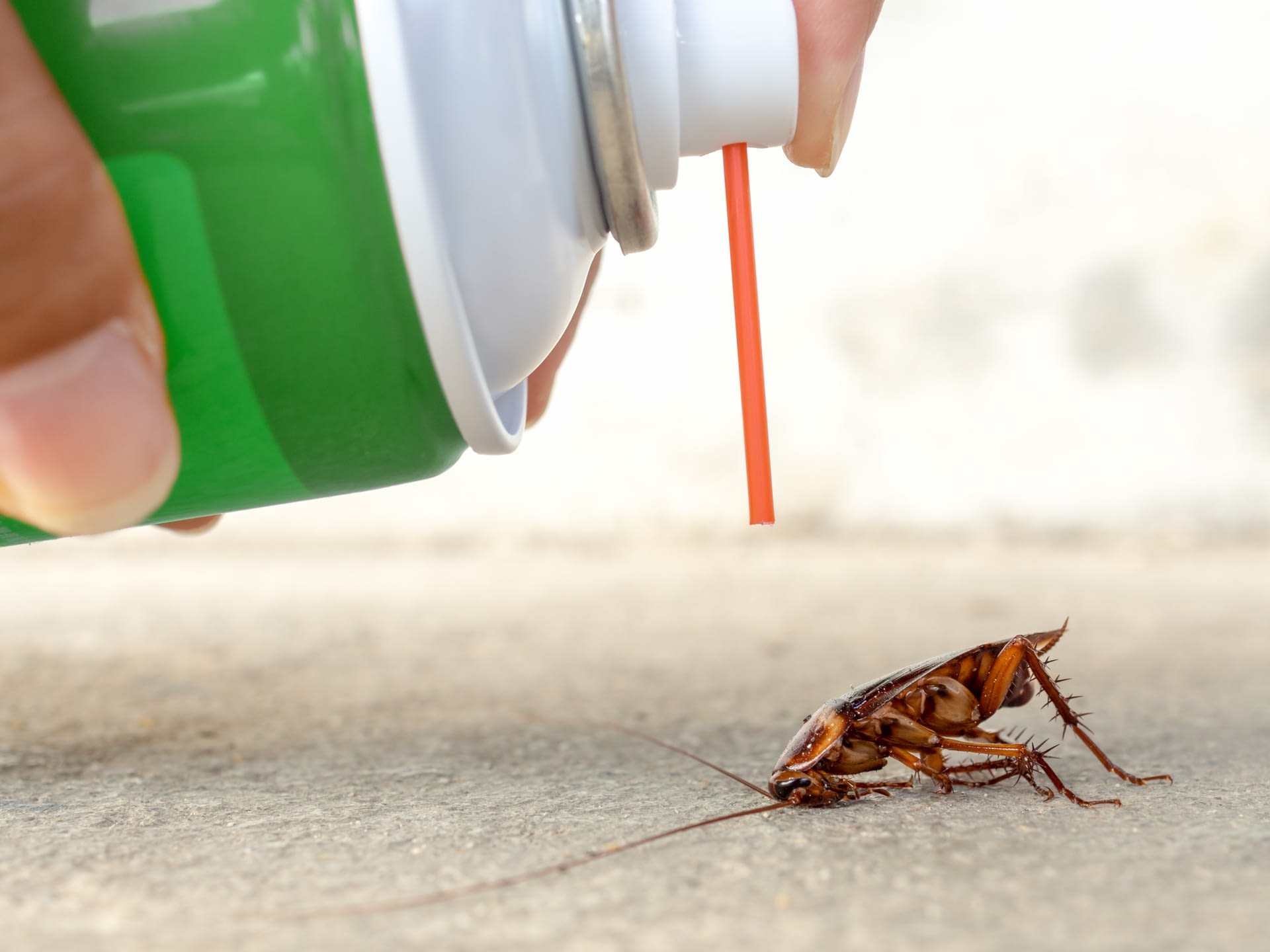 Pest Control – Ensuring A Healthy Environment