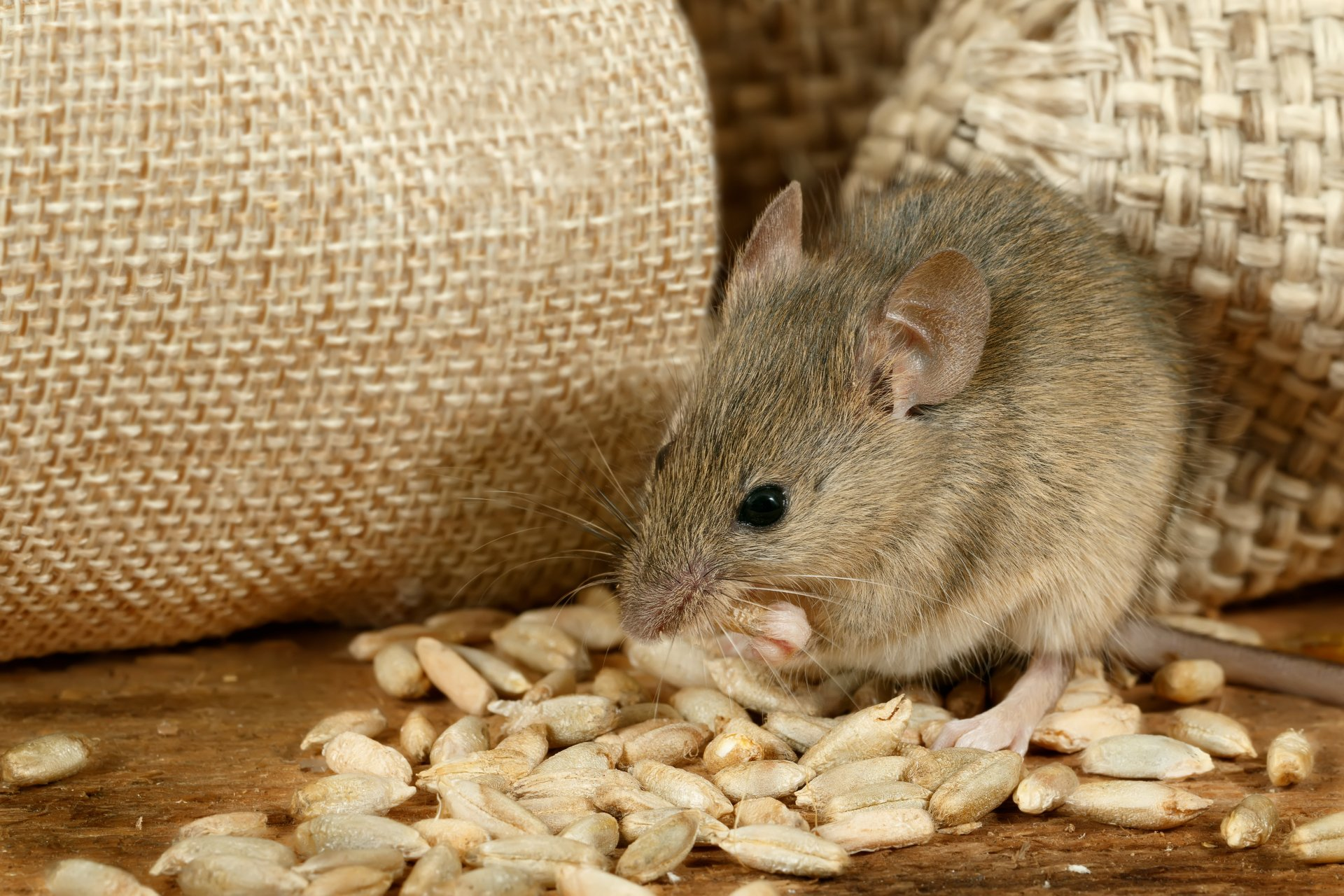 Why Is Pest Control Important for Ecology and Health?