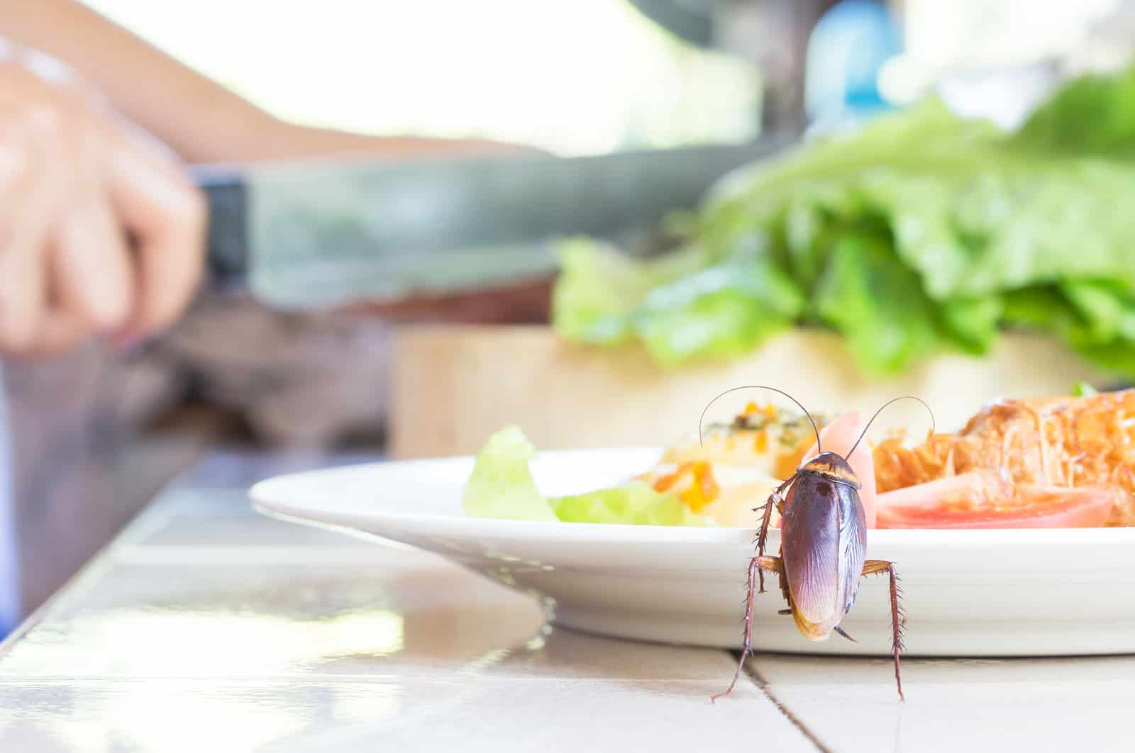 Riddex and Home Pest Control